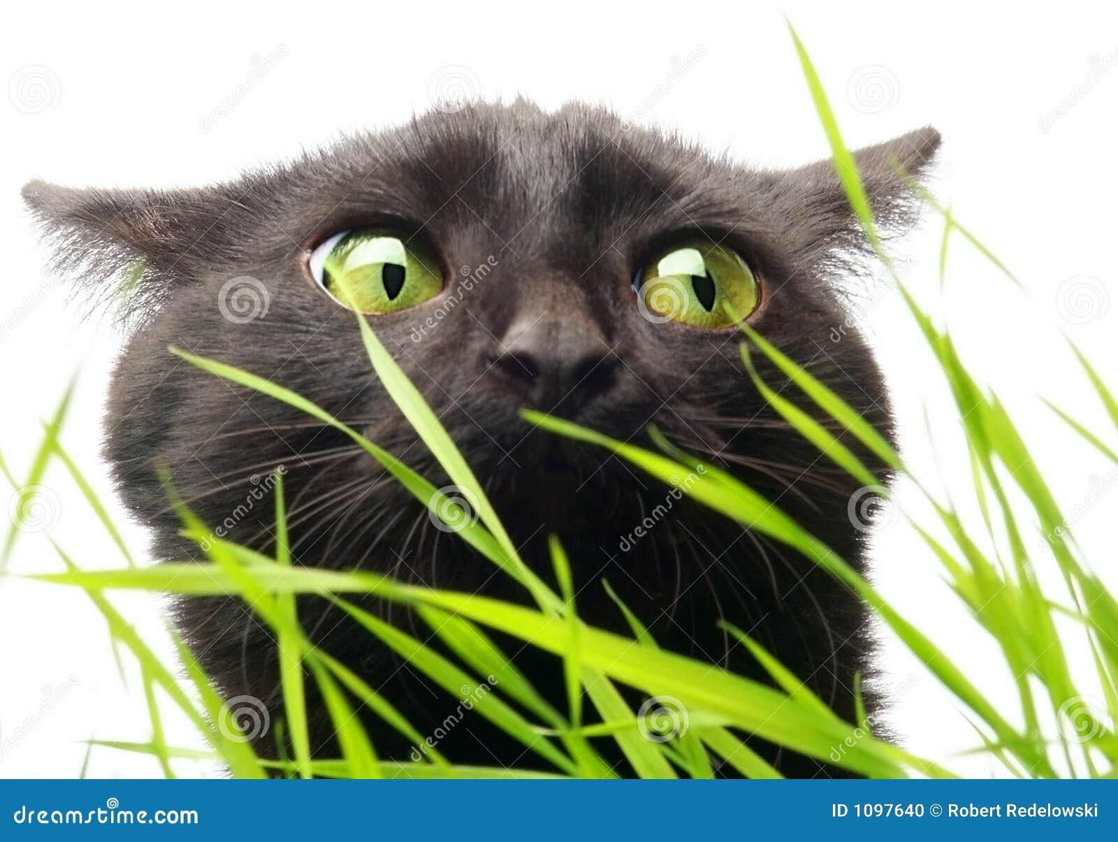 Gato & grama