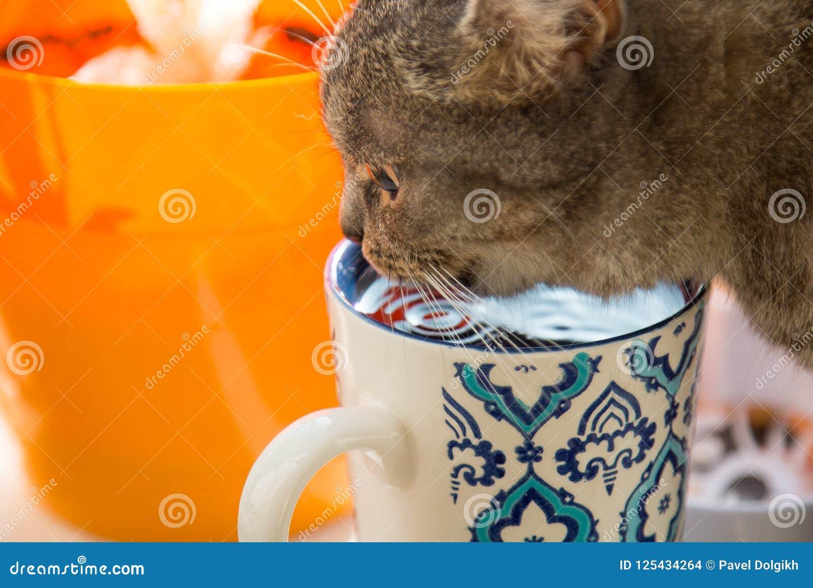 Gato gris con la taza azul
