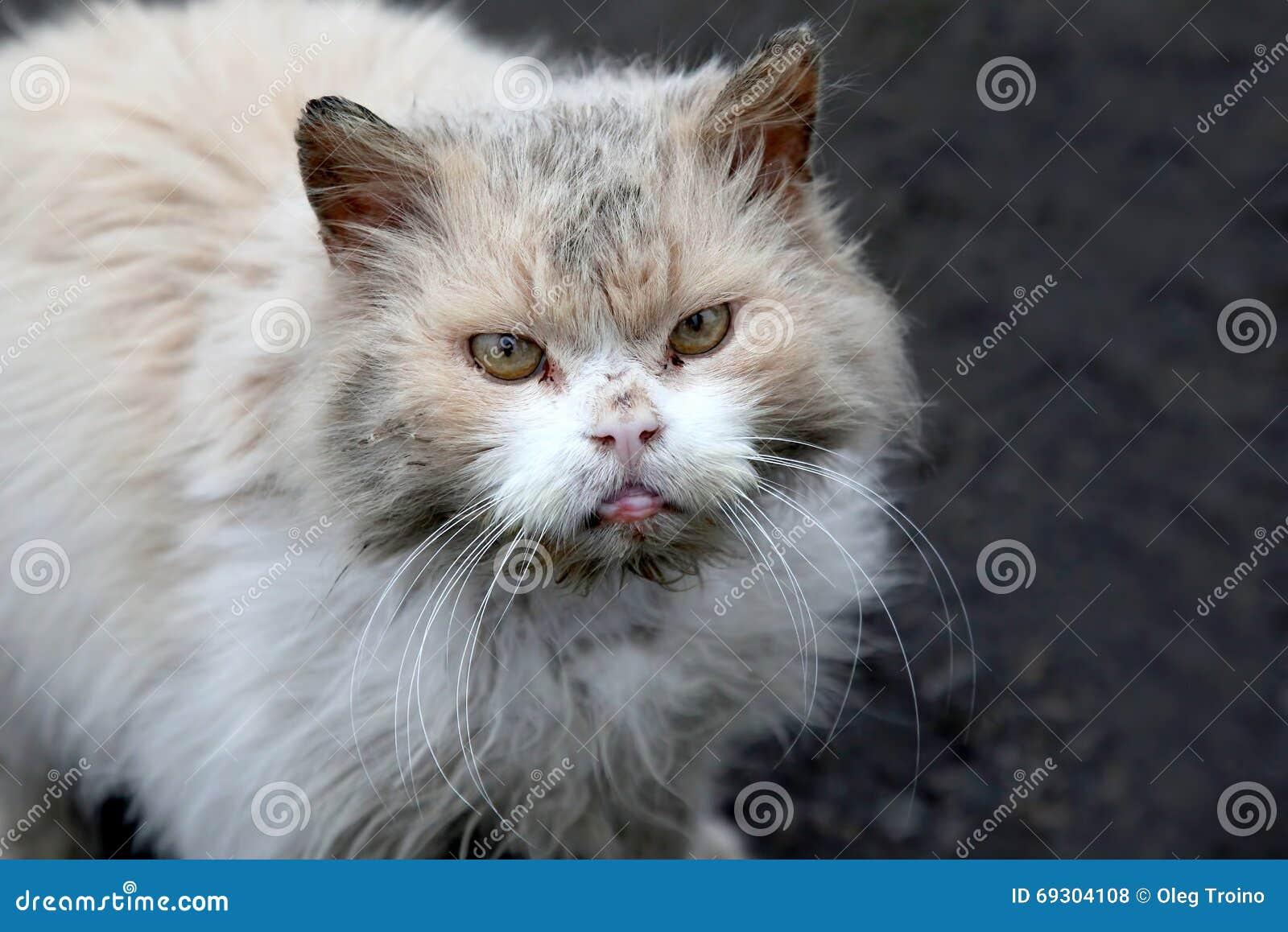 Gato gruñón de la calle sin hogar sucia
