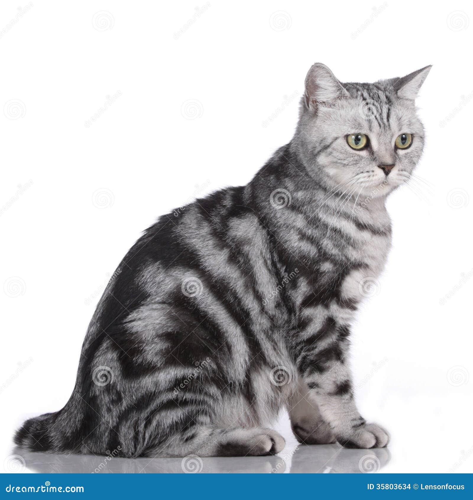 Gato isolado lateralmente