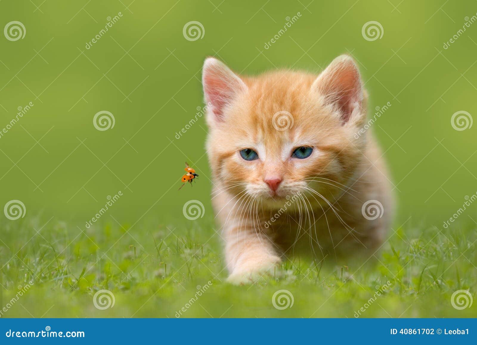 Gato joven con la mariquita en un campo verde