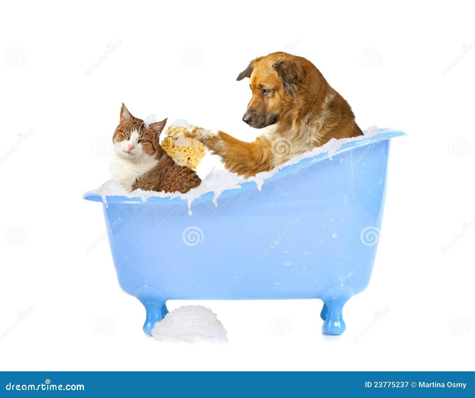 Gato-lave