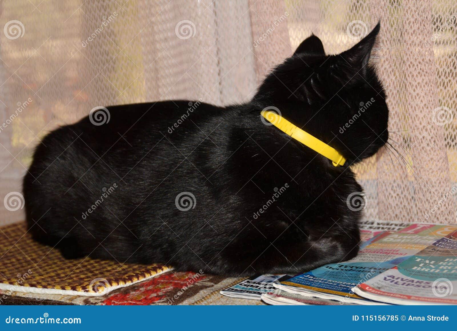 Gato leal que espera a su dueño para volver a casa