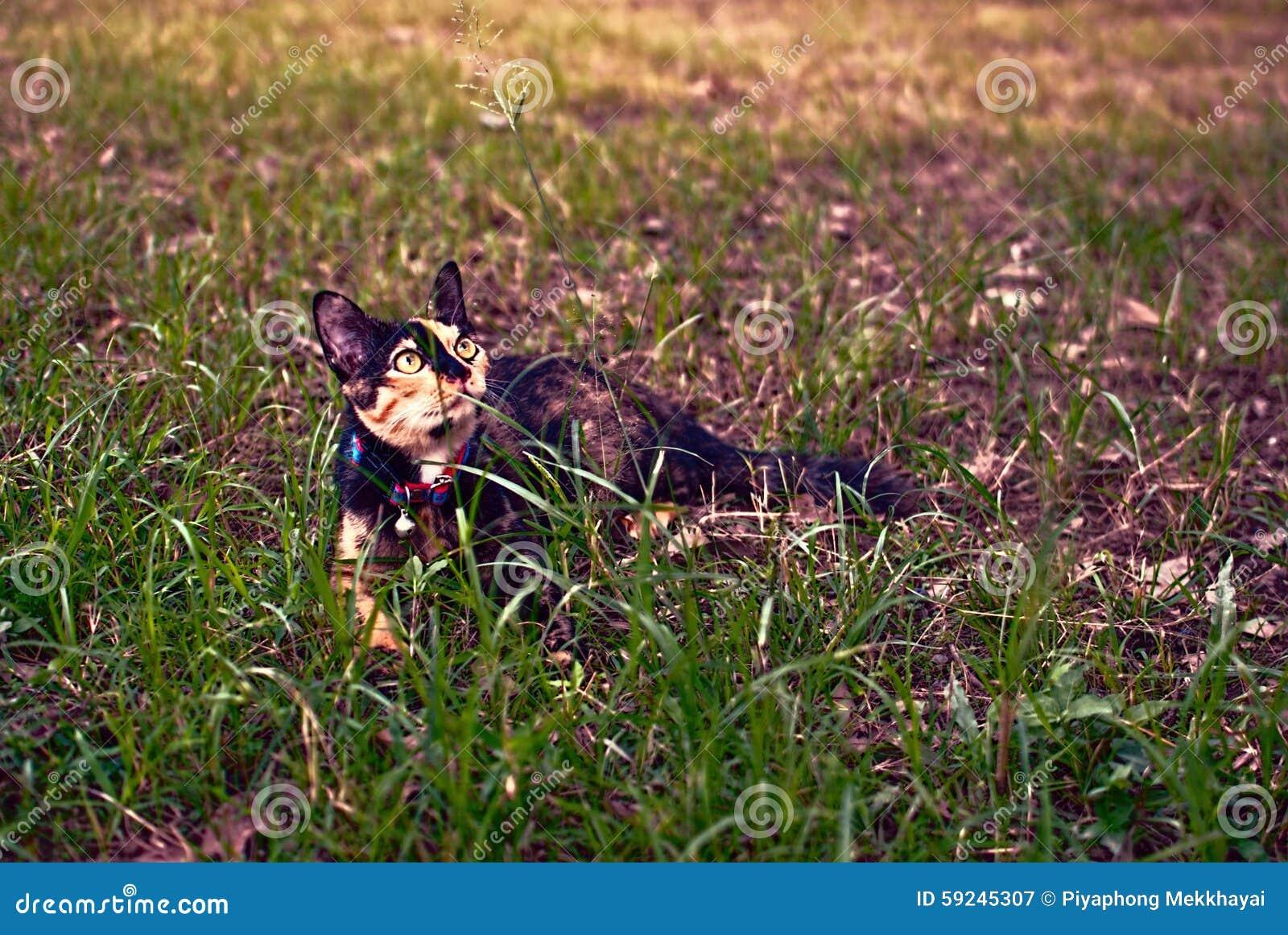 Download Gato lindo imagen de archivo. Imagen de retrato, animal - 59245307