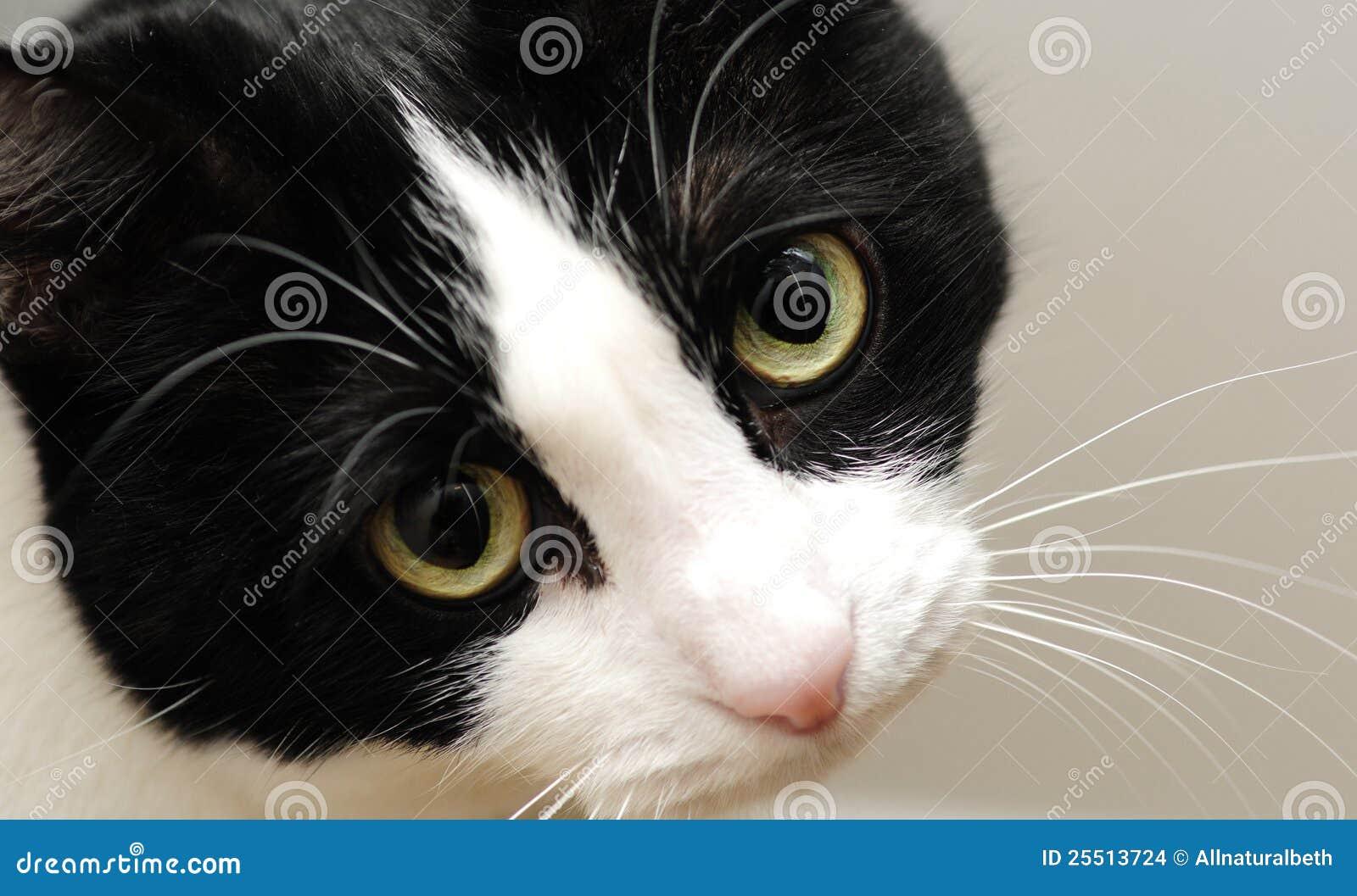 Gato lindo con los ojos tristes