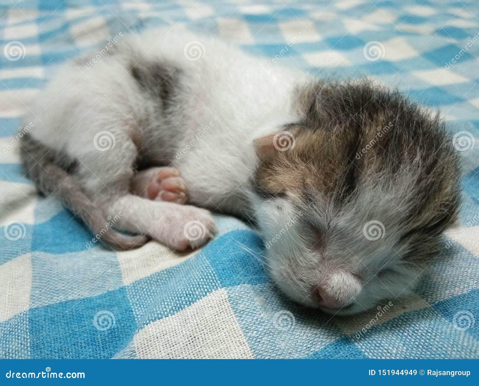 Gato lindo del bebé el dormir