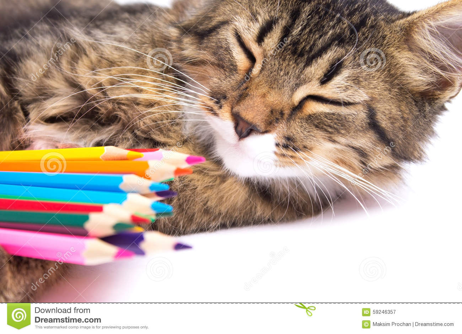 Gato lindo el dormir con los lápices coloreados