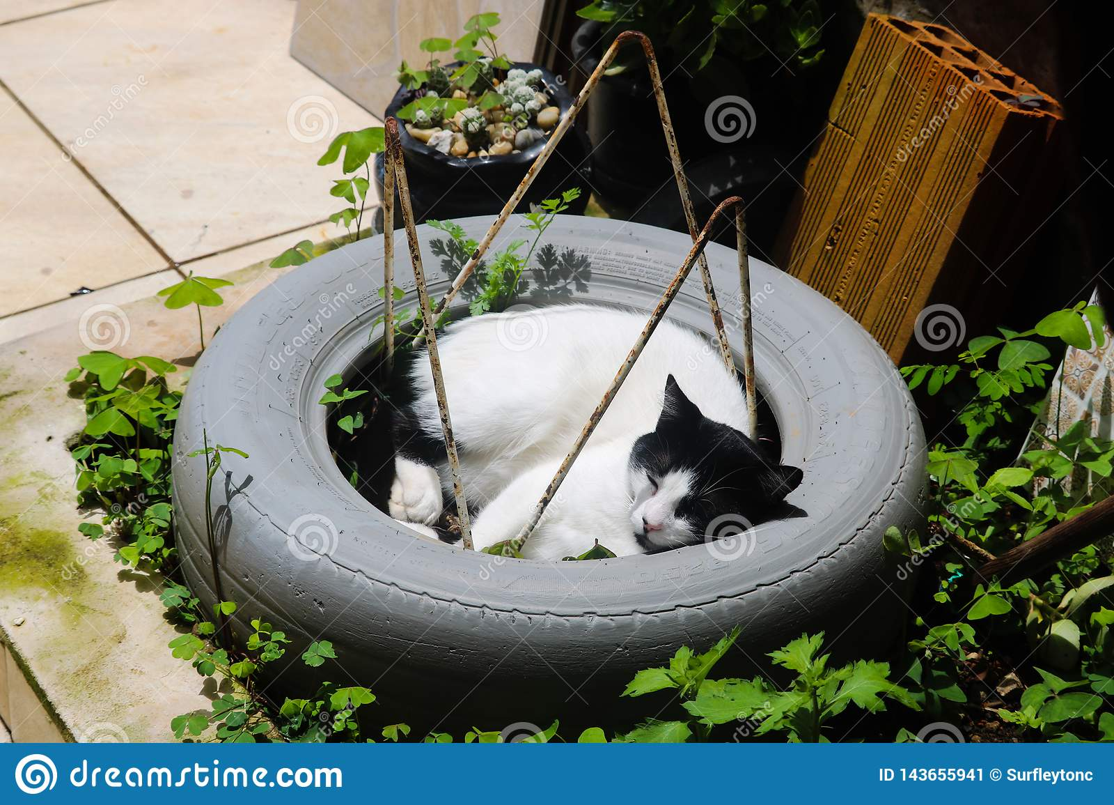 Gato lindo no sono do pneu
