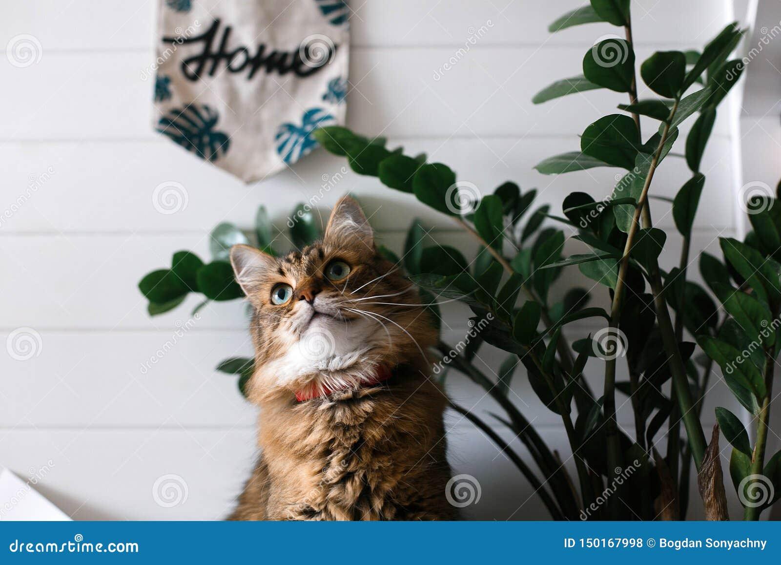 Gato lindo que se sienta bajo ramas de la planta verde y que se relaja en estante de madera en el backgroud blanco de la pared en