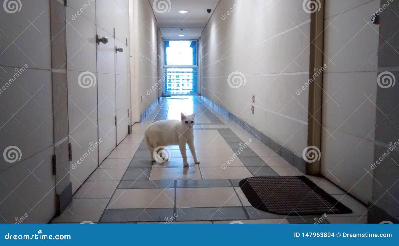 Gato más extraño blanco