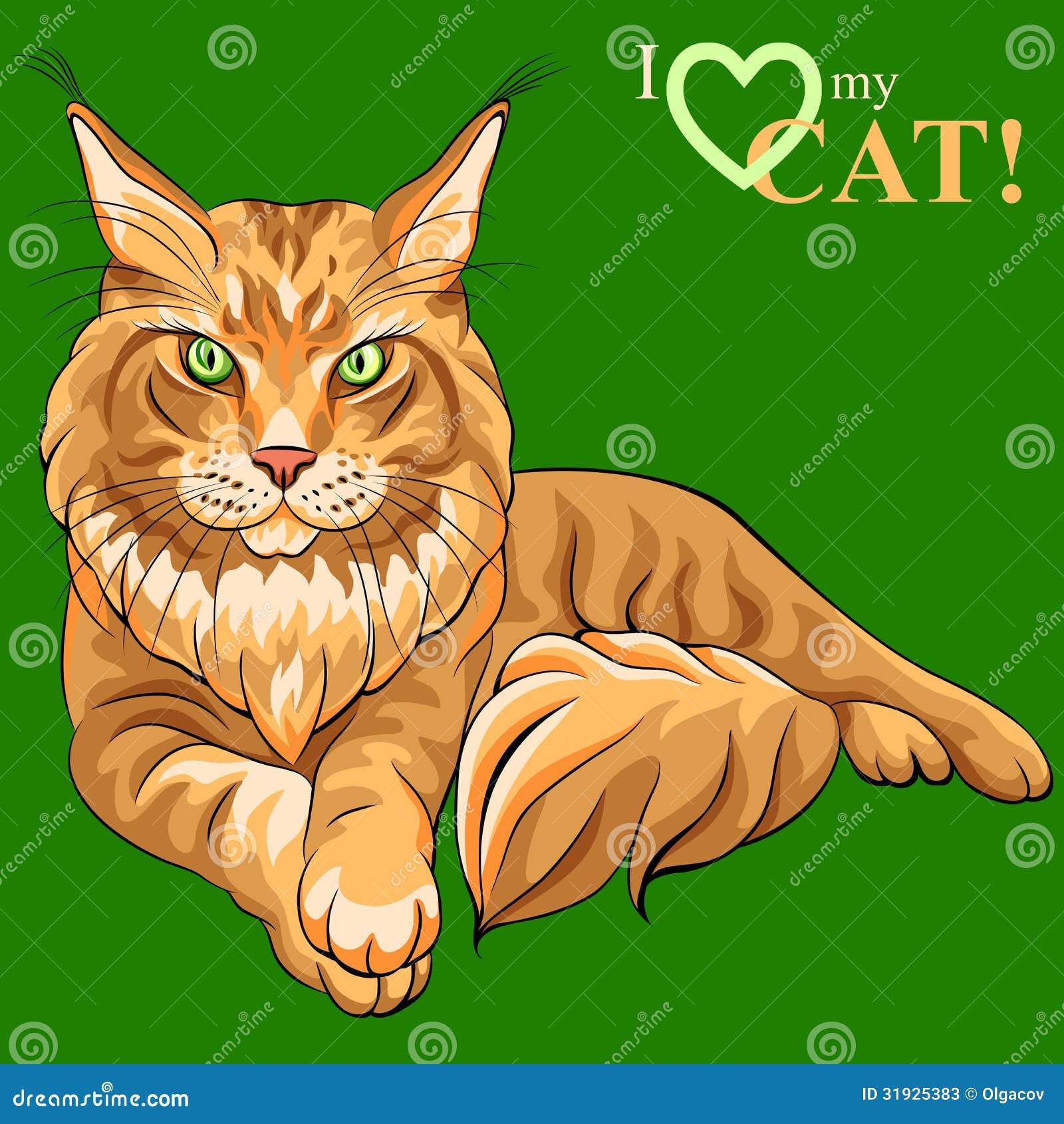 Gato macio de Maine Coon do esboço da cor do vetor