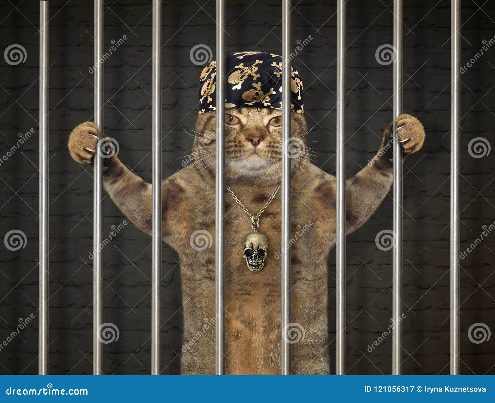 Gato mau atrás das barras