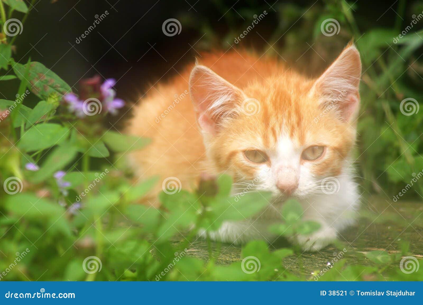Gato minúsculo en luz suave