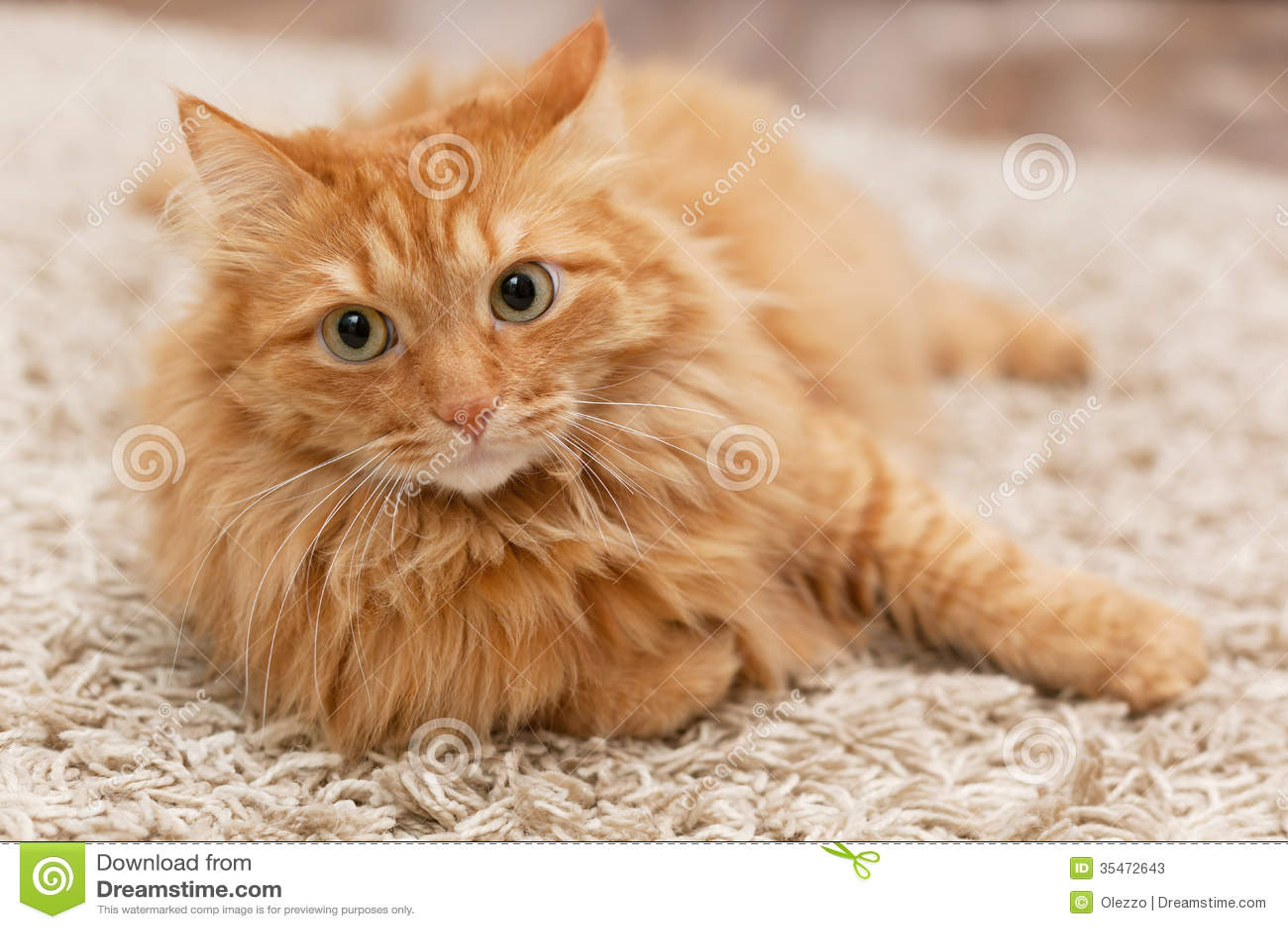 Gato mullido