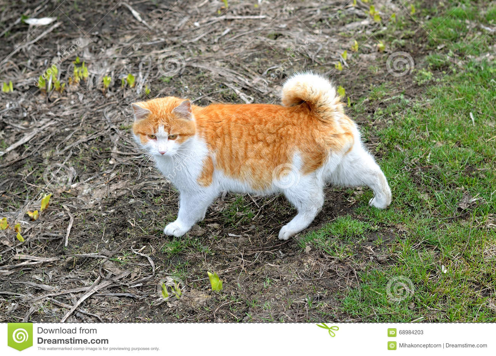 Gato mullido hermoso, fotos de la primavera