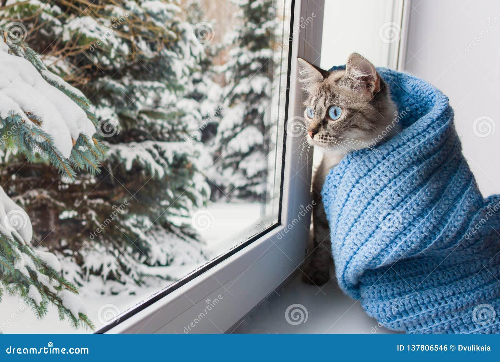 Gato mullido lindo con el sititng de los ojos azules en un travesaño de la ventana
