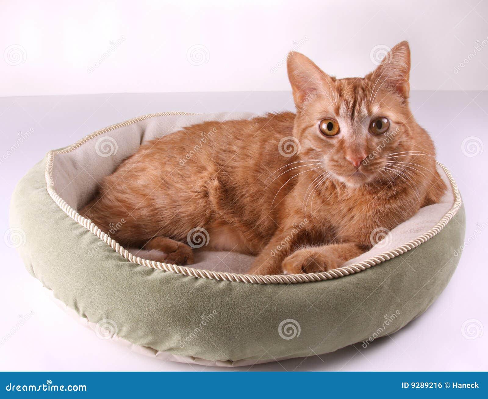 Gato na cama imagem de stock royalty free imagem 9289216 - Cama para gato ...