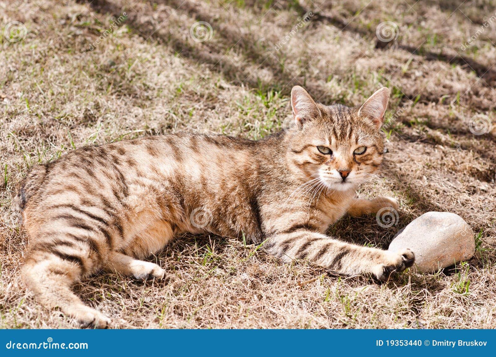 Gato na terra