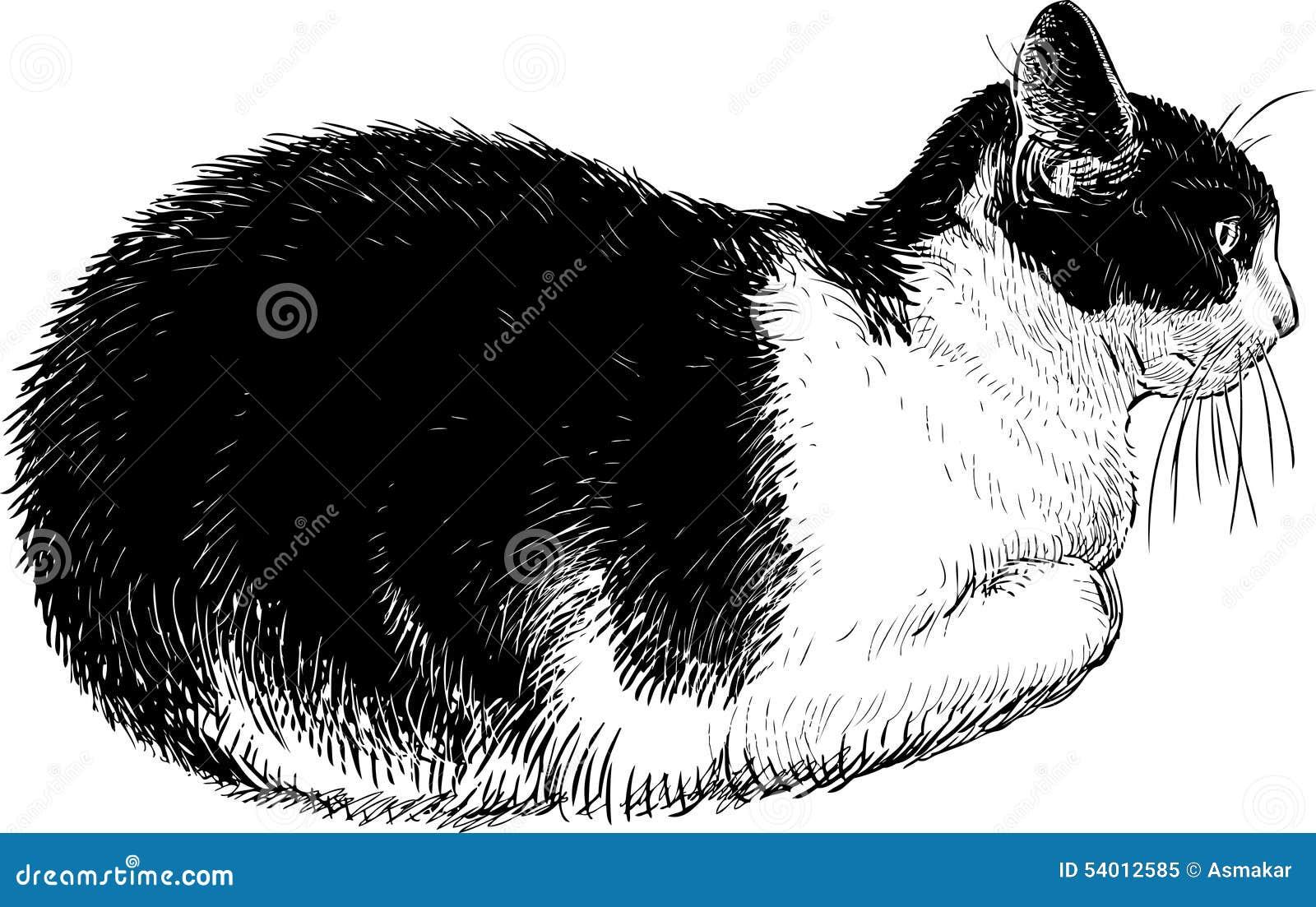 Dibujos De Gatos En Blanco Y Negro