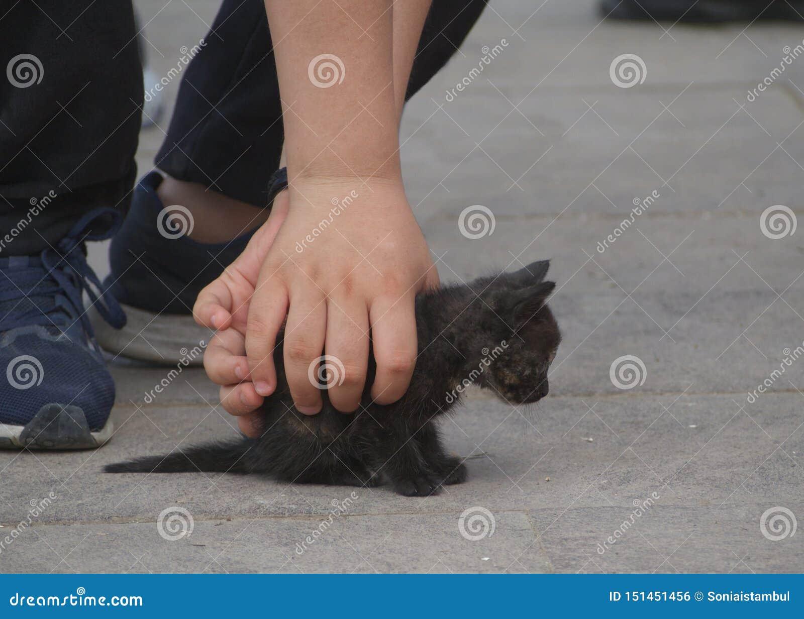 Gato negro de la calle