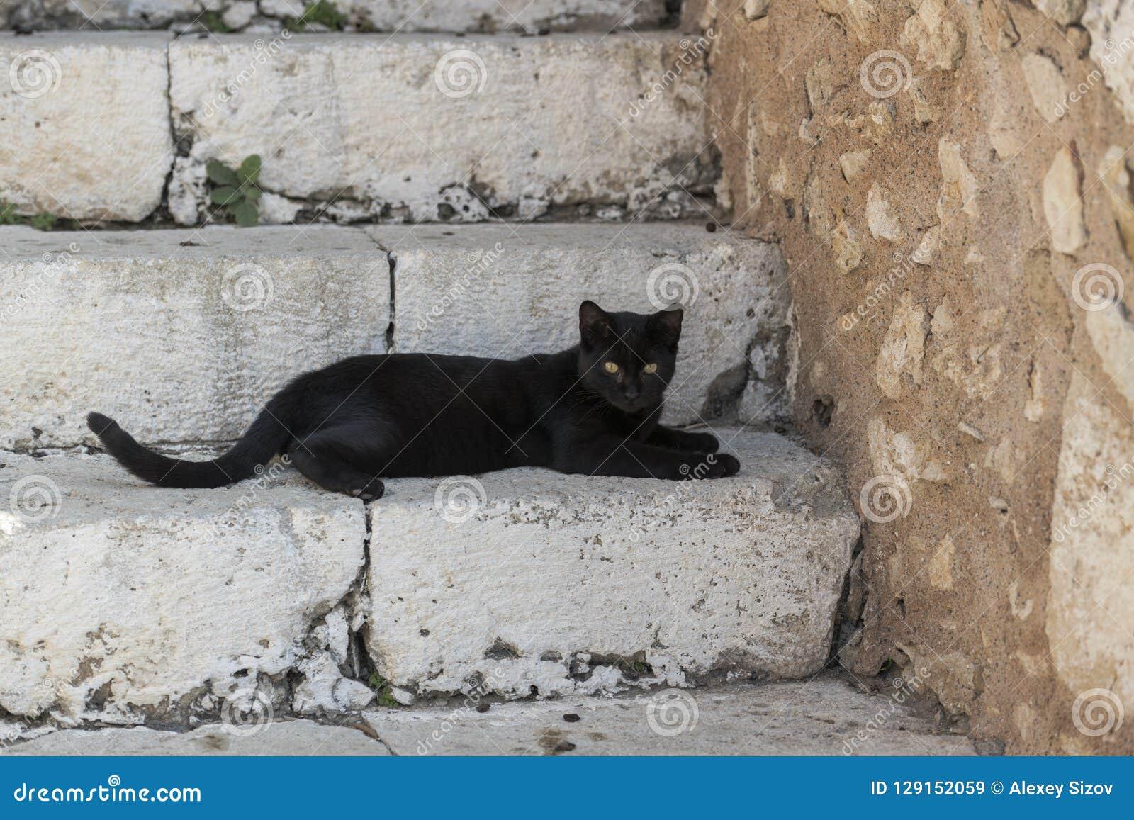 Gato negro en las escaleras