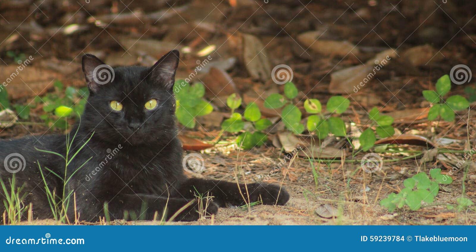 Download Gato negro - restos foto de archivo. Imagen de suerte - 59239784