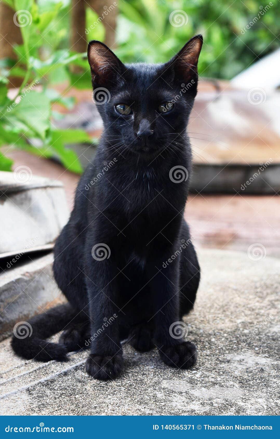 Gato negro sin hogar pobre que se sienta en la tierra sucia para esperar un poco de comida