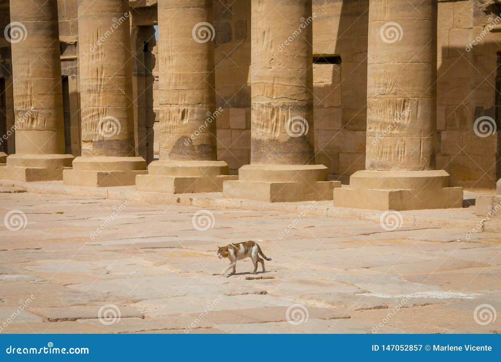 Gato no acesso do porticado ao templo dedicado ao Isis da deusa Philae