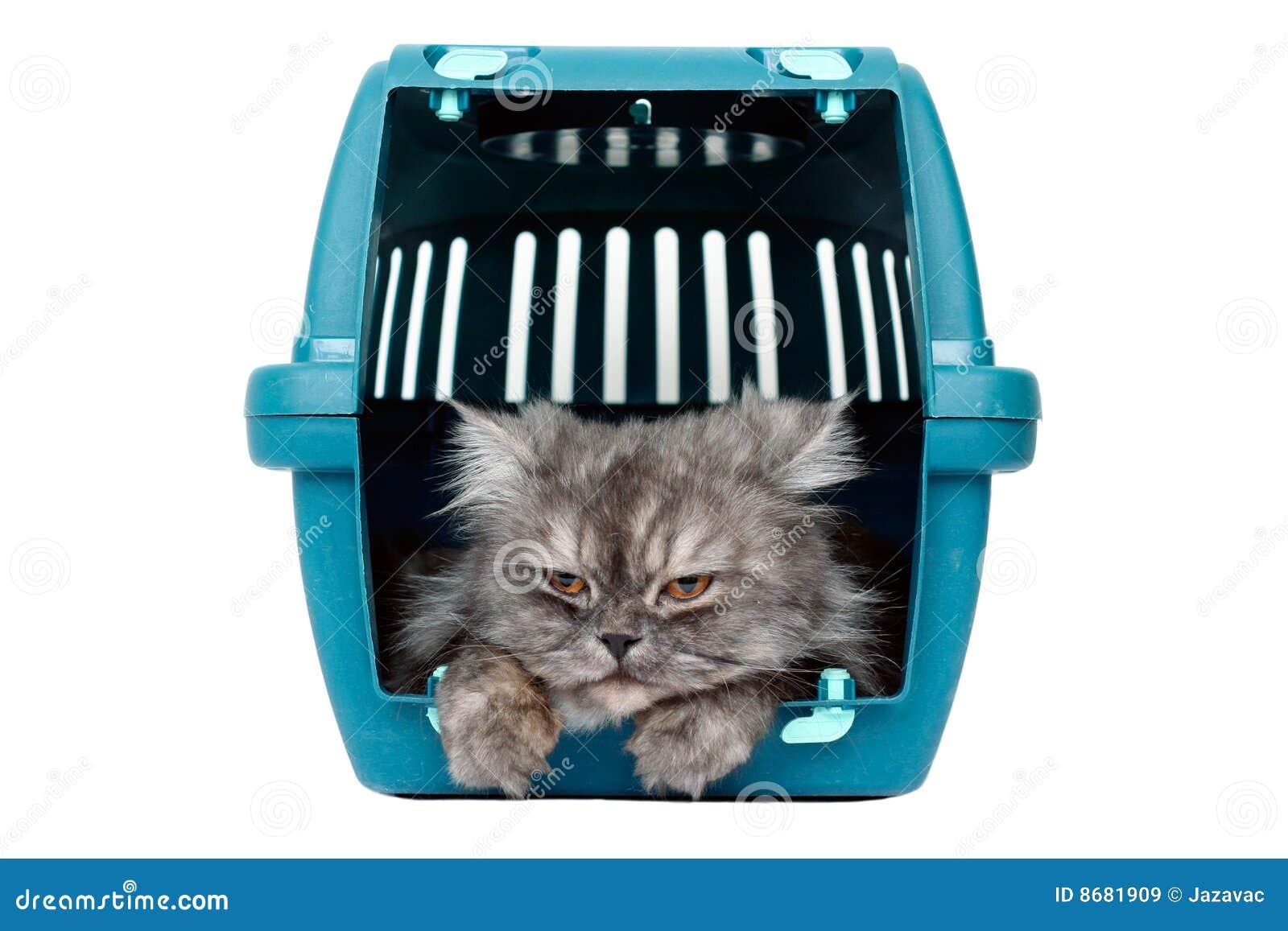 Gato no portador da gaiola