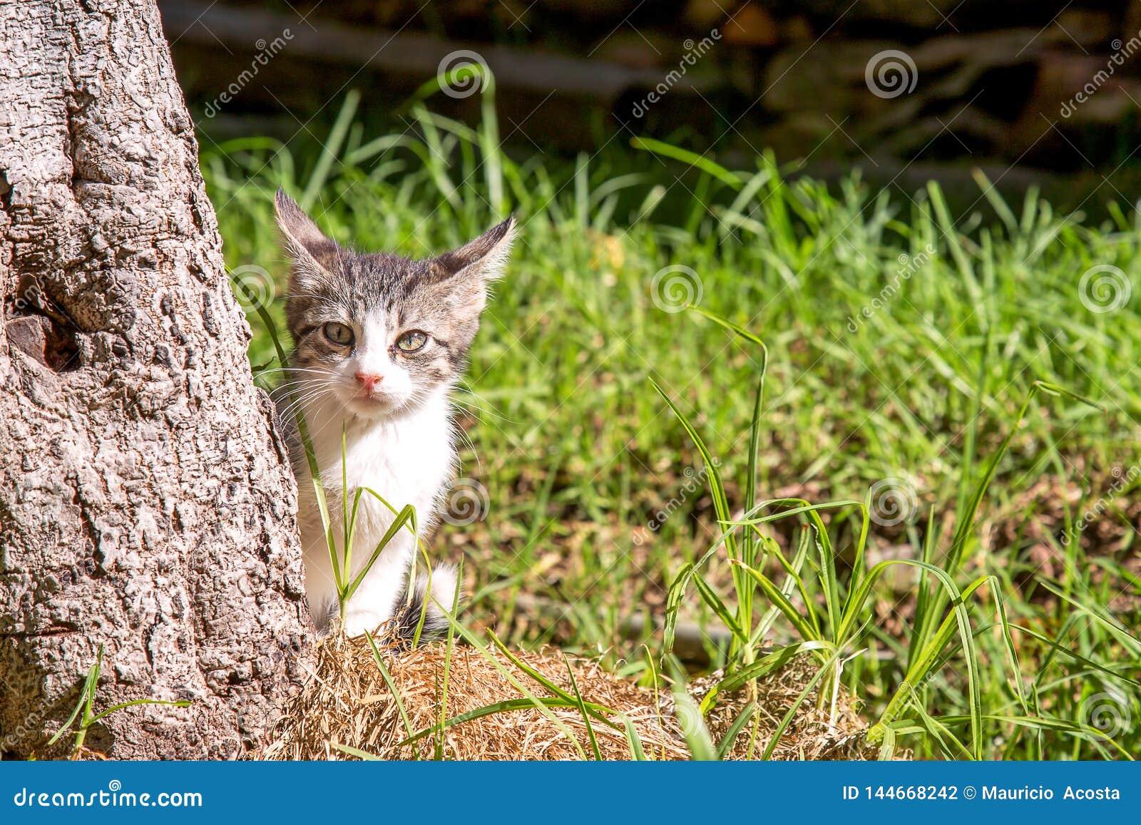 Gato pequeno branco e cinzento atrás de uma árvore