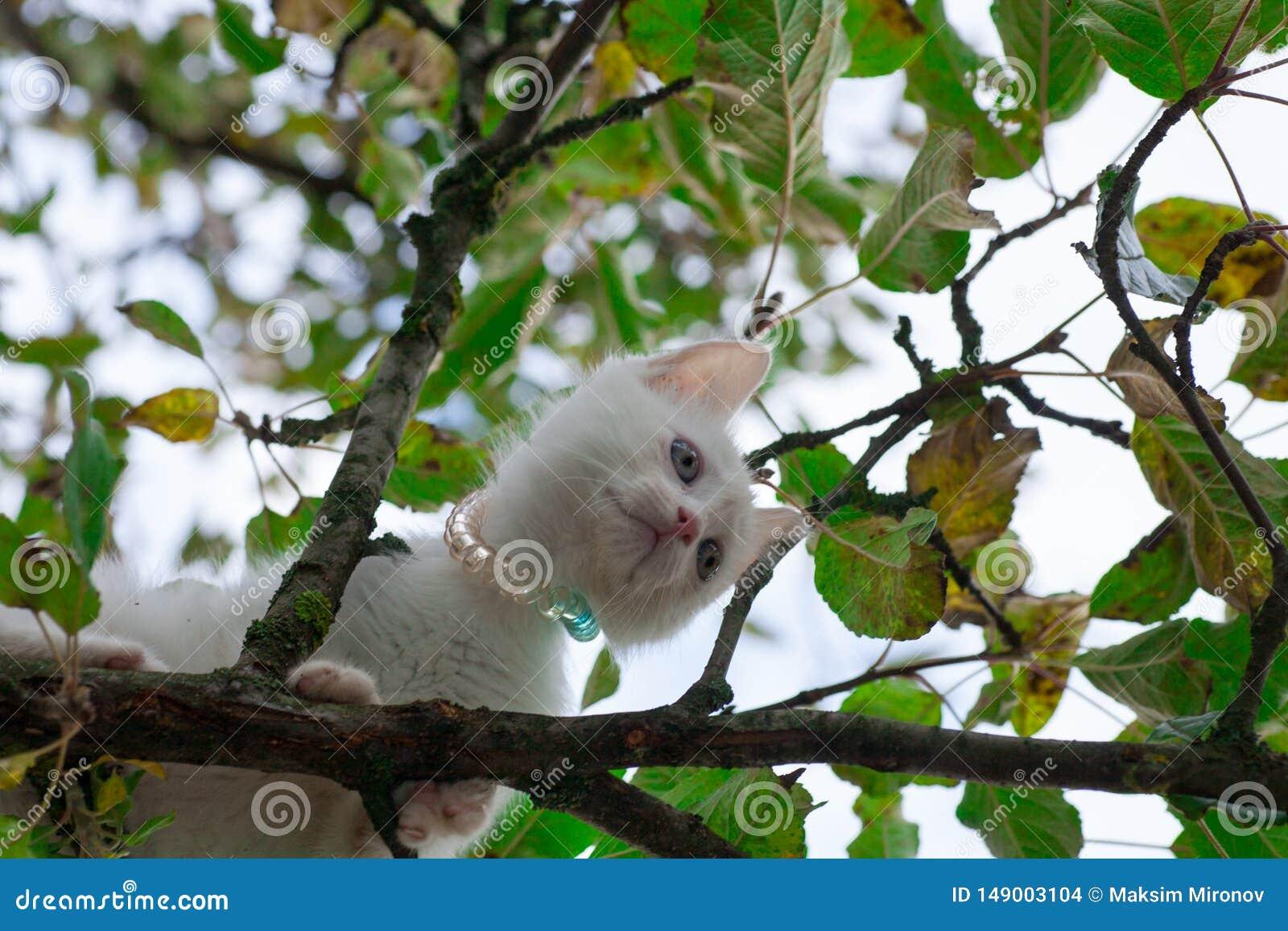 Gato pequeno no close up da ?rvore