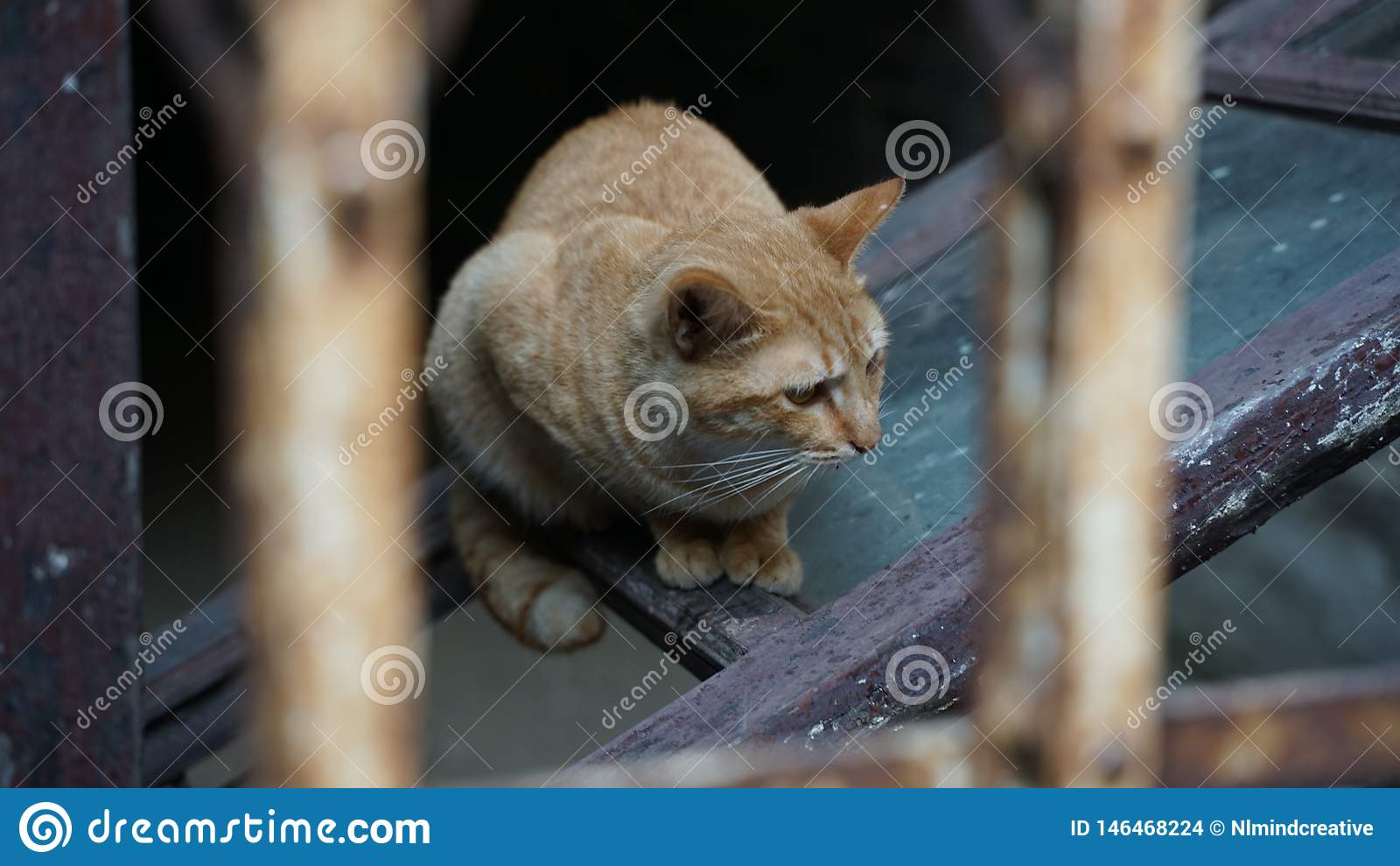 Gato perdido con la expresión sola