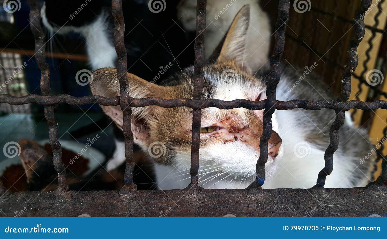 Gato perdido, gato pobre