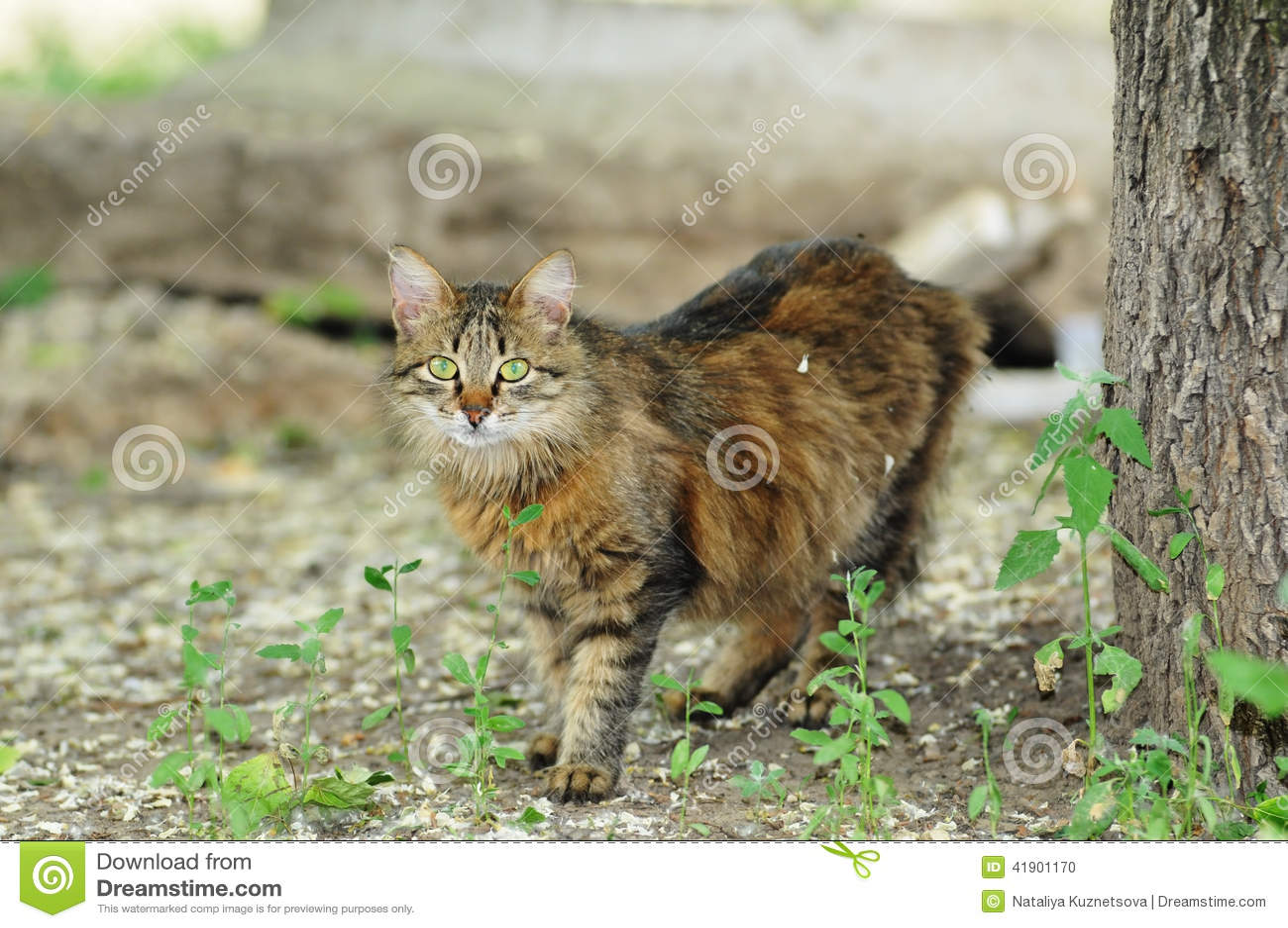 Gato perdido mullido