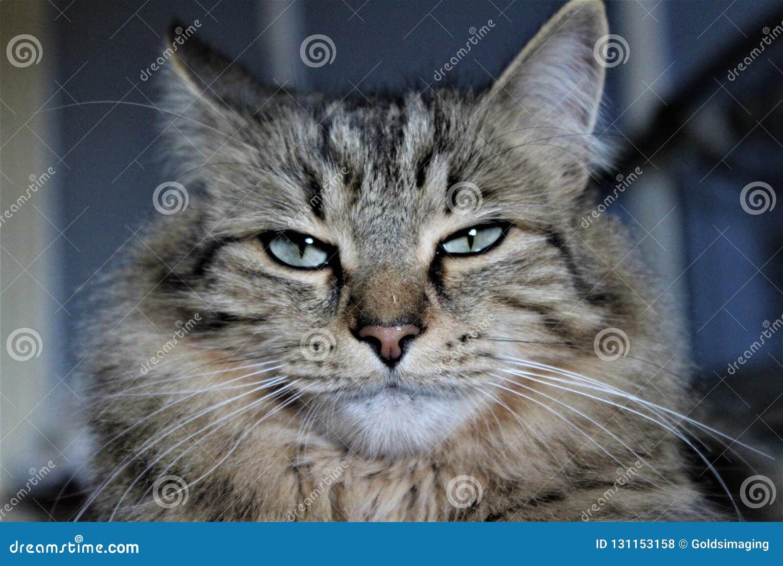 Gato perturbado