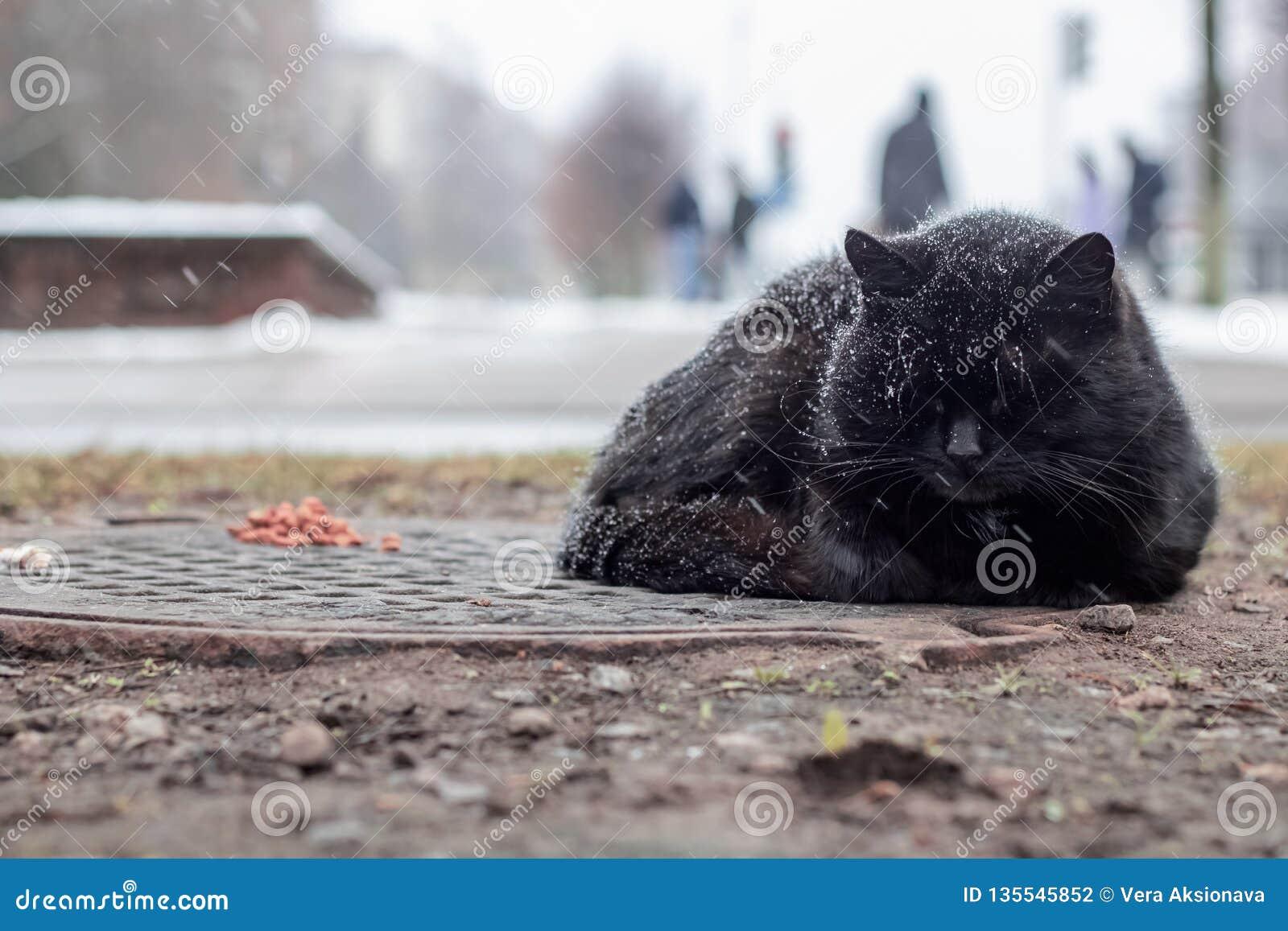 Gato preto desabrigado que dorme sob a neve