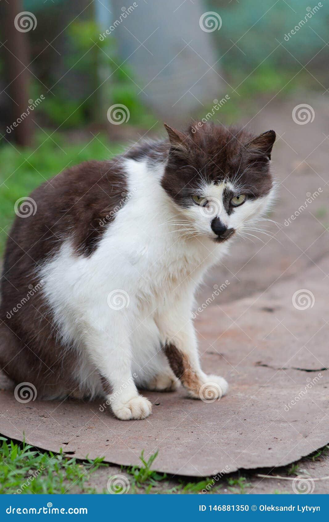 Gato preto e branco da rua