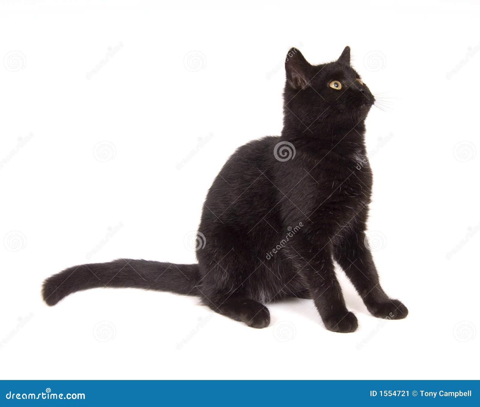 Gato preto que senta para baixo a vista à direita