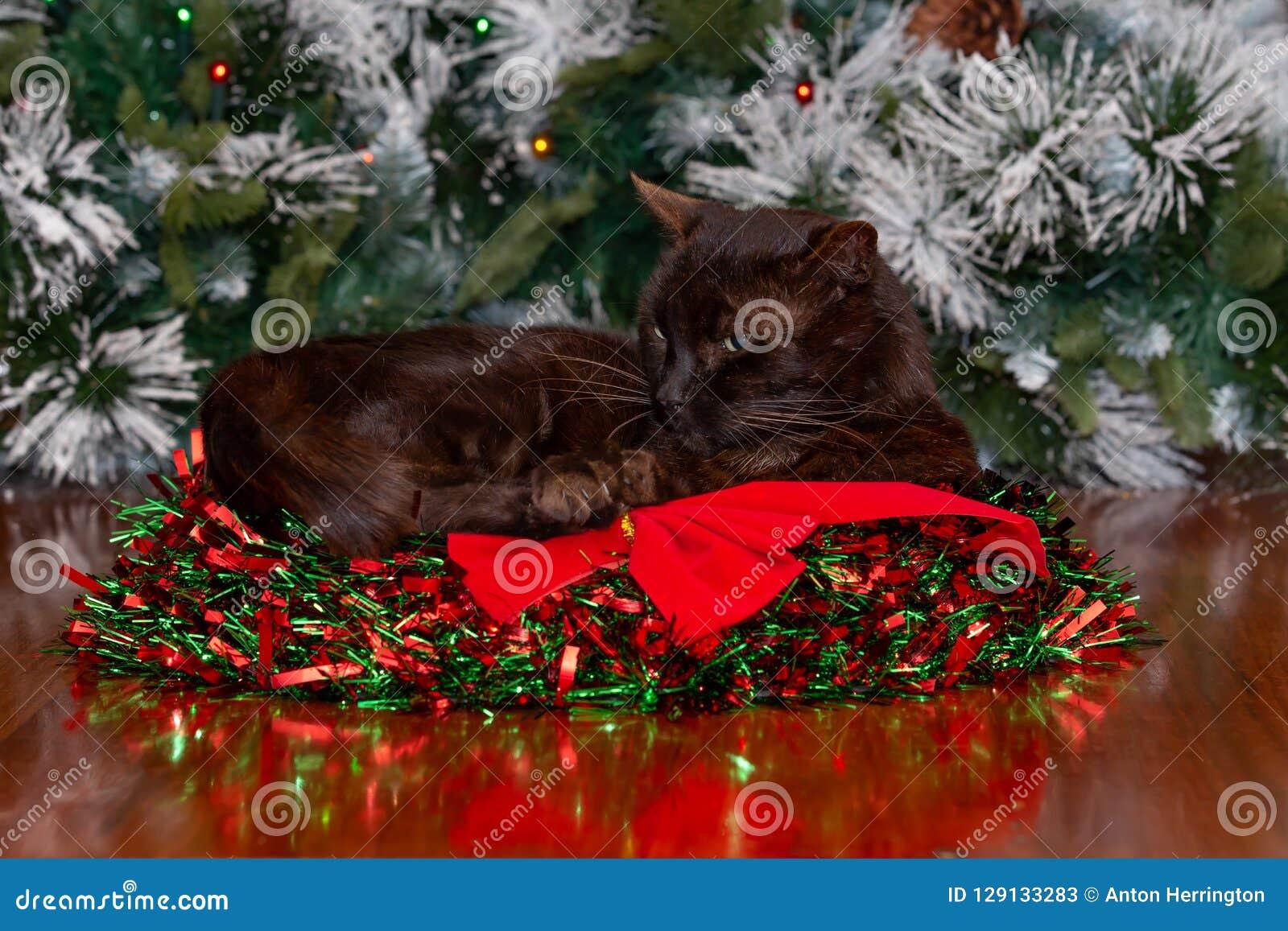 Gato preto que senta-se na grinalda do Natal com fita vermelha