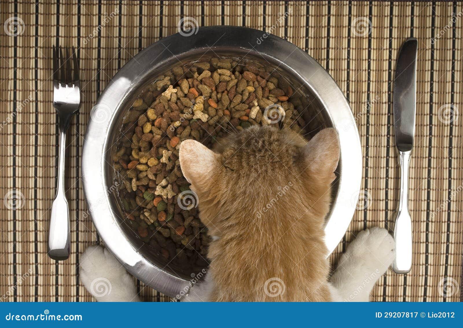 Gato que come da bacia de prata