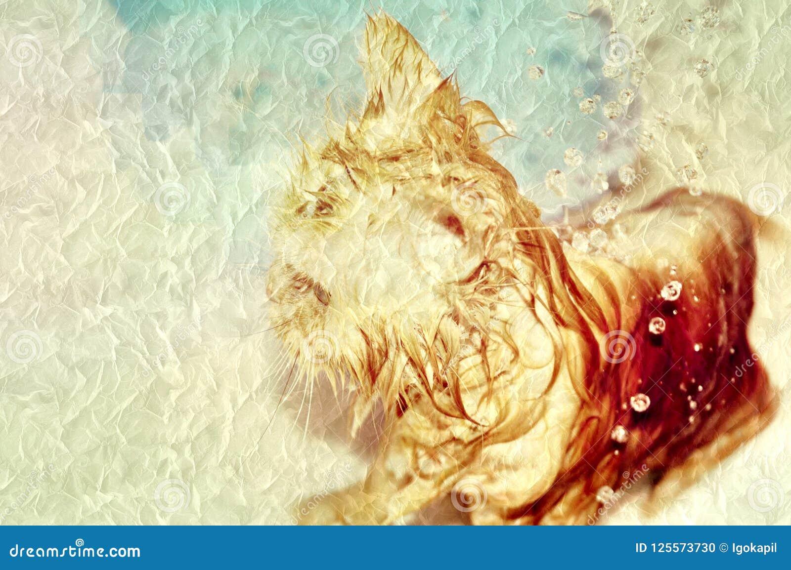 Gato que consigue mojado