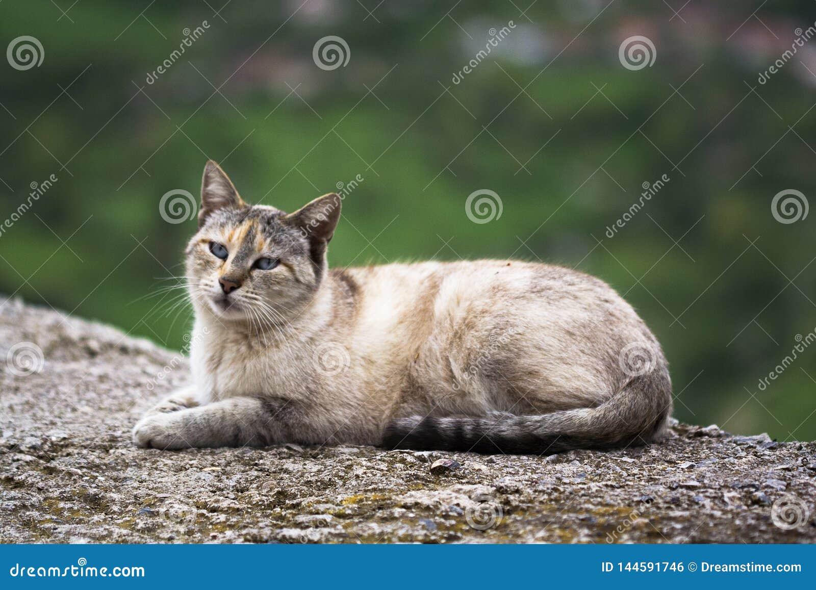 Gato que descansa na estrada