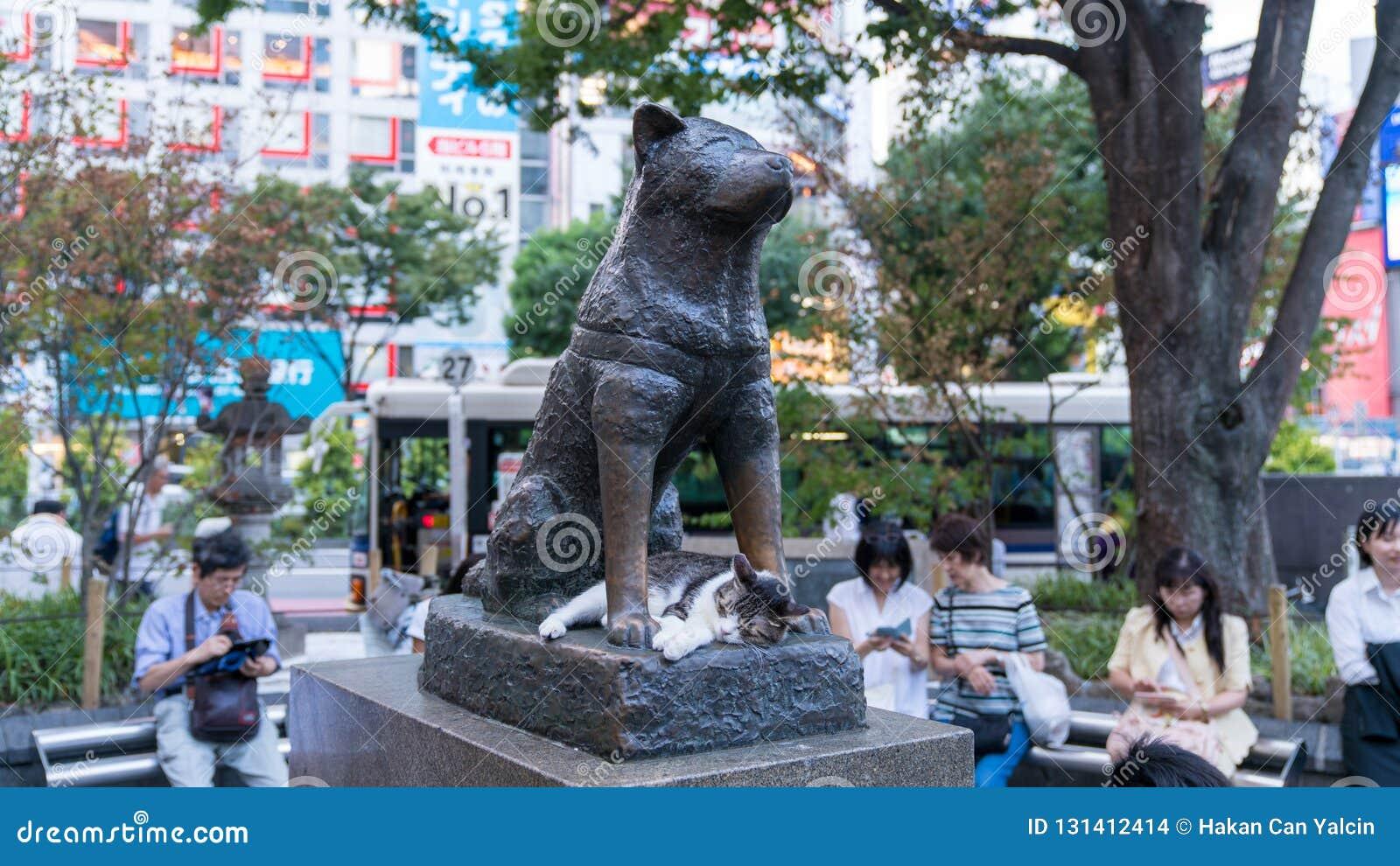 Gato que duerme debajo de Hachiko la estatua conmemorativa del perro delante de la estación de Shibuya
