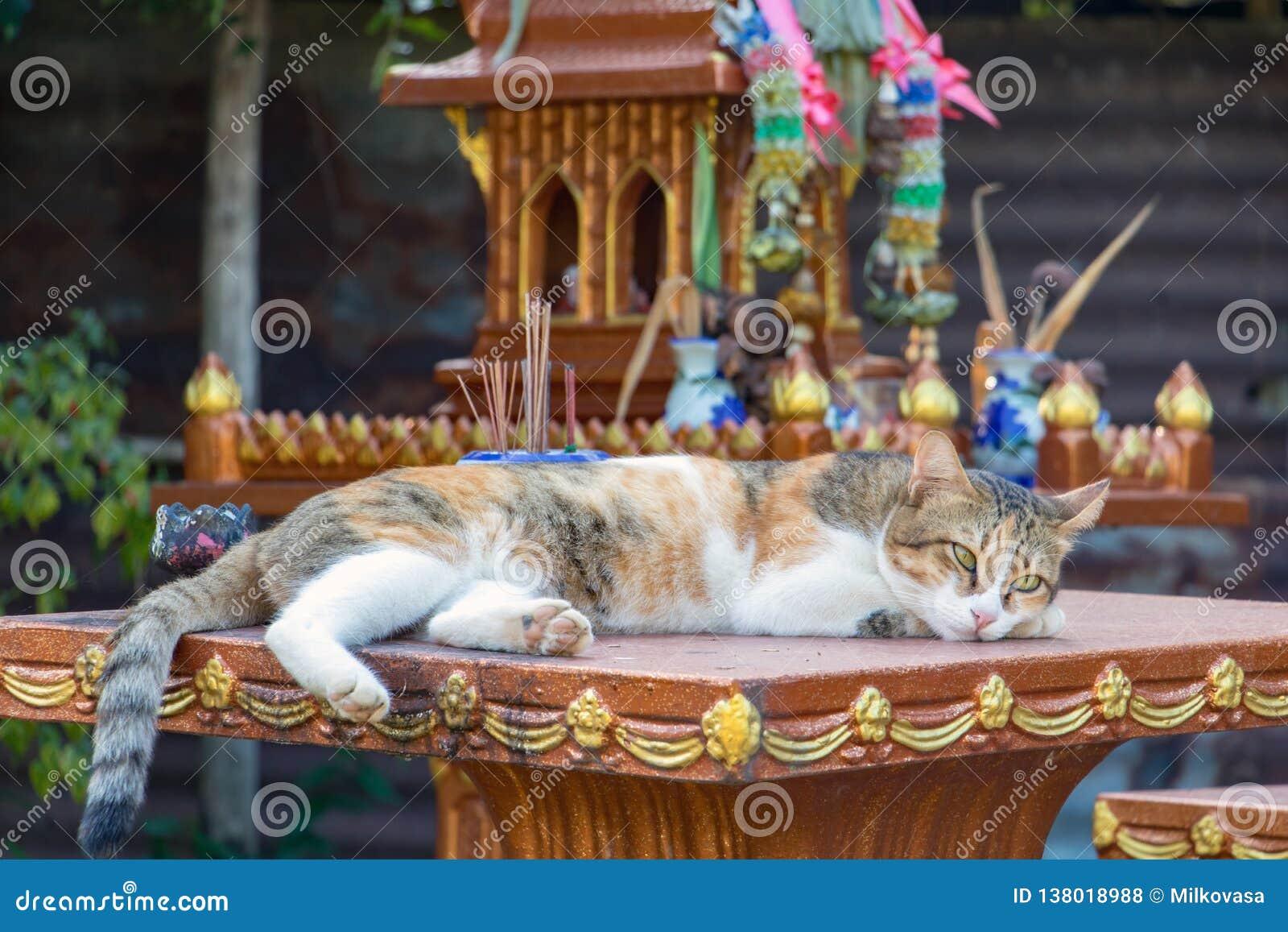Gato que encontra-se em uma coluna