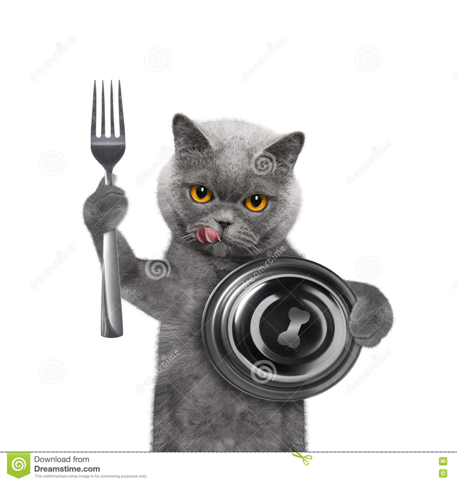 Gato que espera un poco de comida