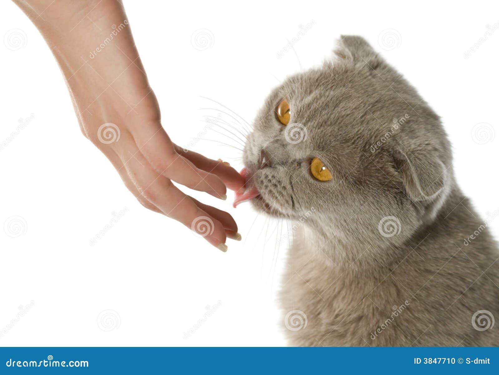 Mordeduras de gato que lame