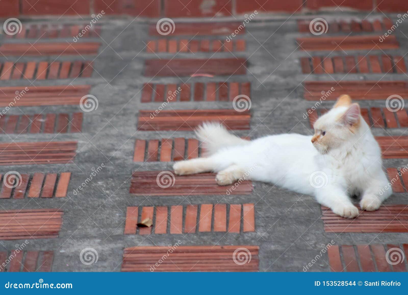 Gato que miente en el medio del pasillo