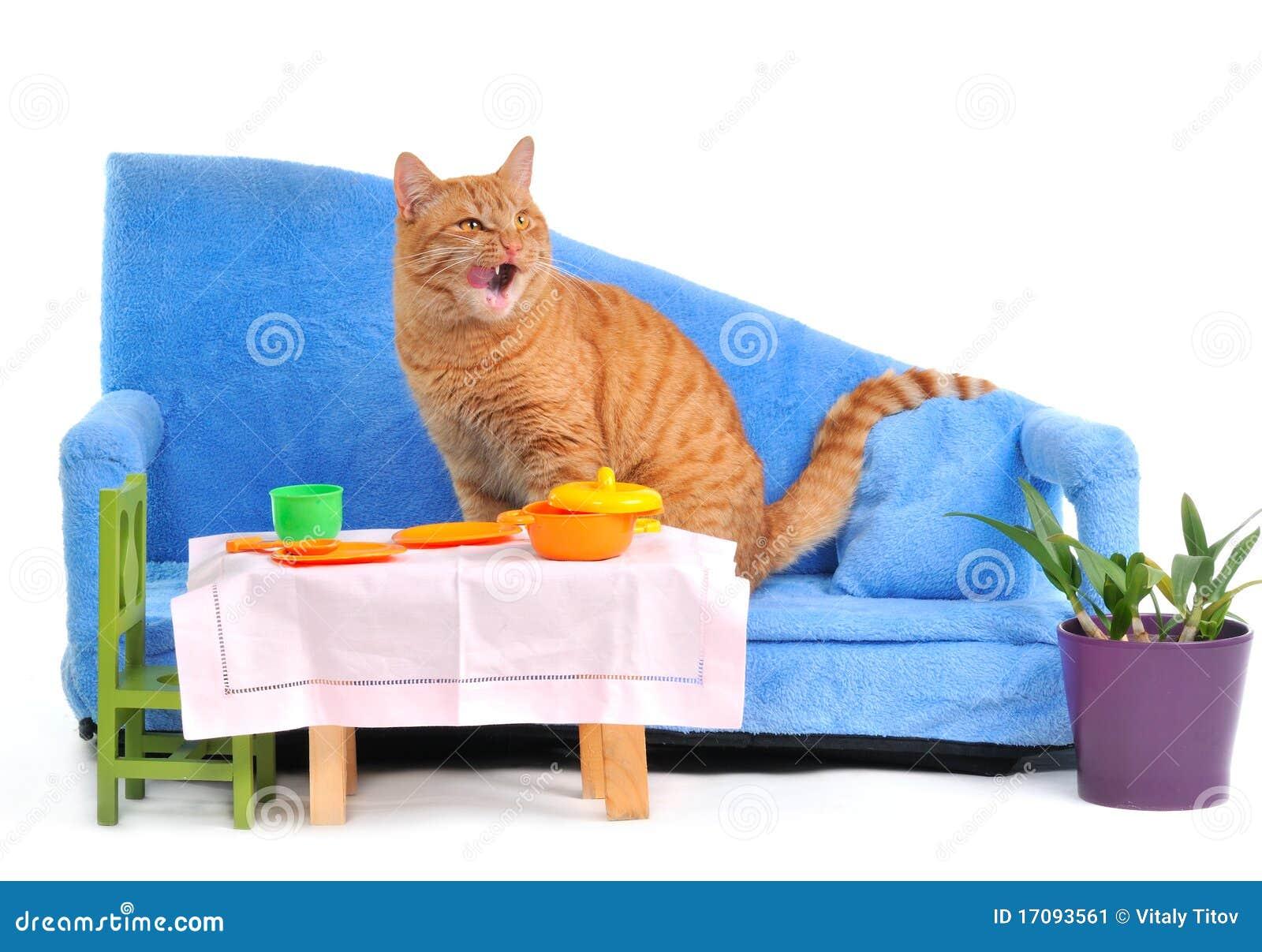 Gato que se lame después de una comida