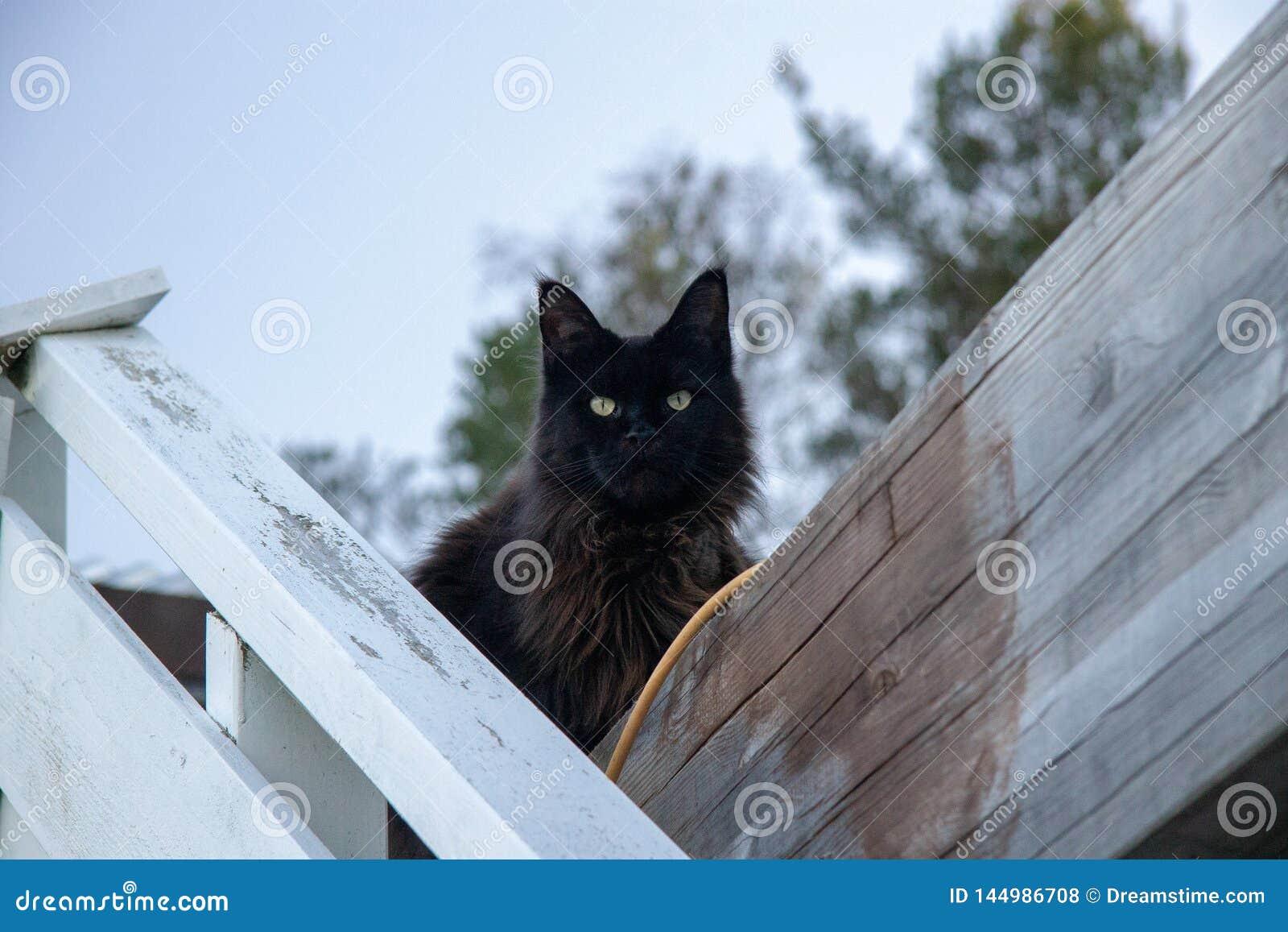 Gato que se sienta en la cerca