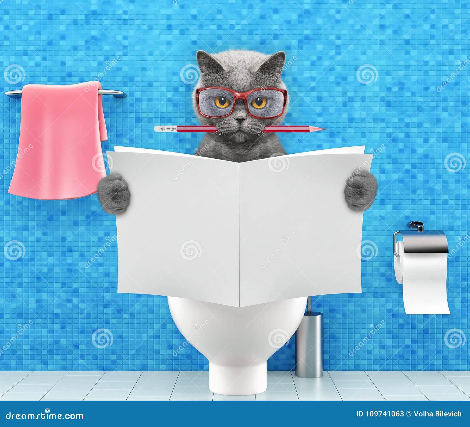 Gato que senta-se em um assento da sanita com o compartimento da leitura dos problemas ou da constipação da digestão ou o jornal